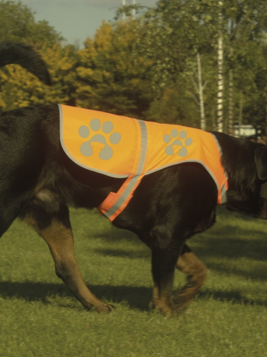 Orange dog jacket