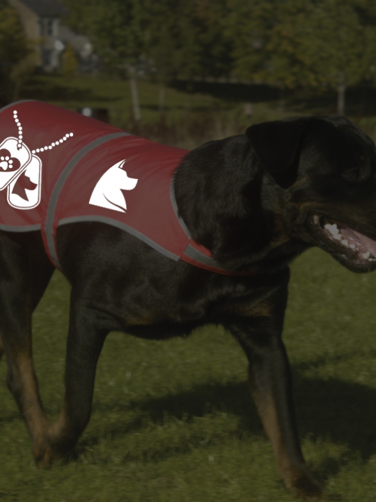 Red dog jacket_ref