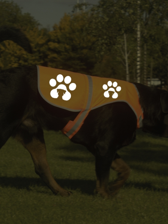 Orange dog jacket_ref
